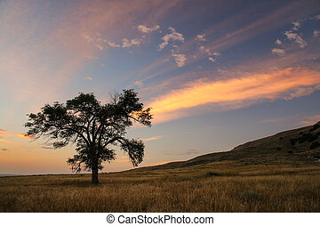 Lone tree at sunrise, western Nebraska, USA - Lone tree at ...