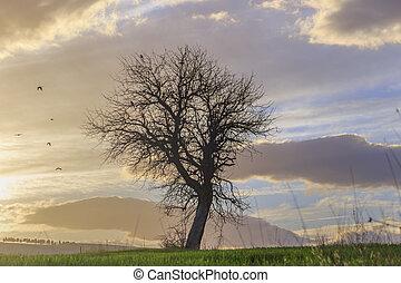Lone tree at sunset. Italy