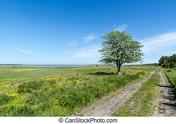 Lone tree by a dirt road in a coastland by springtime in a...