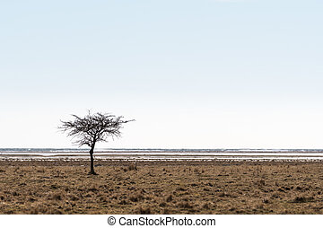 Lone tree by the coast