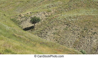 lone tree growing in hills