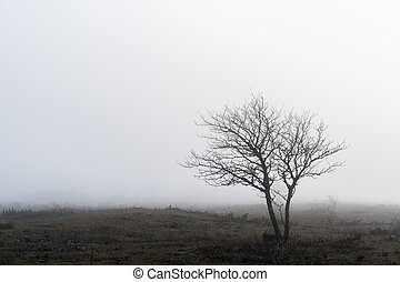 Lone tree in a foggy landscape