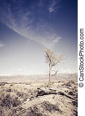 Lone Tree in Desert