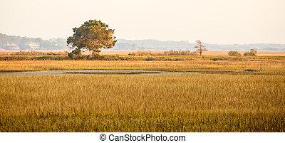Lone Tree in Golden Light on Marsh
