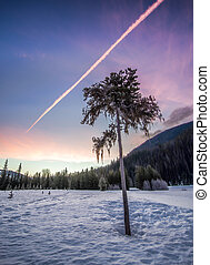 Lone Tree In Winter At Sunrise