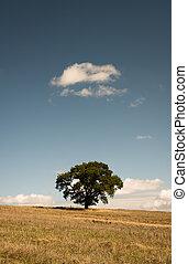 Lone Tree - Oak Tree - Tree in Field - North Yorkshire