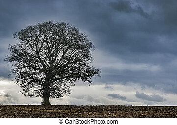 Lone tree on a field