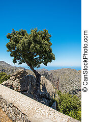 Lone tree on a rocks at Mallorca Spain - Lone tree on a...