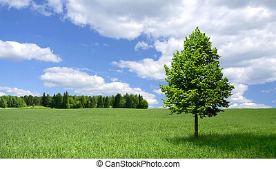 Lone tree on green field - Lone linden tree standing on a ...