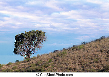 Lone Tree on Hillside in Central Oregon High Desert