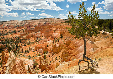 lone tree on the side of the canyon