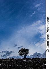 Lone tree vertical