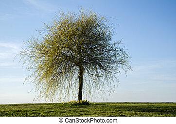 Lone wide tree