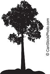 lonelt tree silhouette
