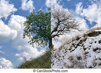 Lonely apricot tree on a hill in two opposite season