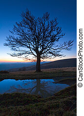 Lonely autumn naked tree on night mountain hill top