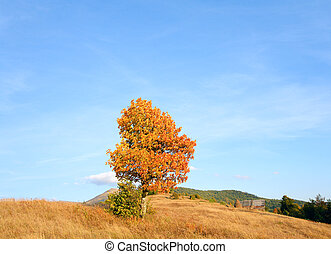Lonely autumn tree on evening Carpathian mountainside.