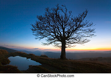Lonely autumn tree on night mountain hill