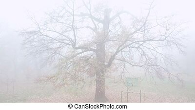 Lonely bare tree in the fog. Autumn park