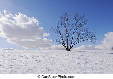 Lonely bare tree on hill