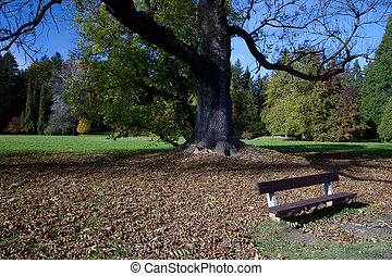 lonely bench in the autumn forest