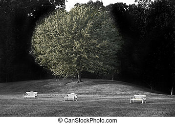 Lonely Benches - Three lonely benches by the trees