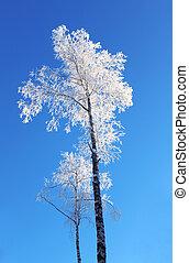 Lonely birch