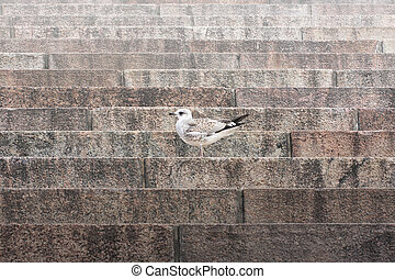 Lonely bird on ancient staircase
