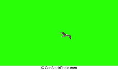 Lonely Bird On Chroma Key