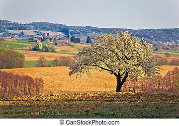 Lonely blossom tree in Prigorje region of Croatia,...