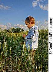 Lonely boy in wheat