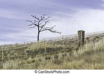 Lonely cemetery barren and calm - Lone tree at a cmemetery ...