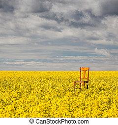 Lonely chair on the empty rape field - Flowers of oil in...