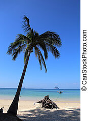 Lonely coconut tree on the tropical beach