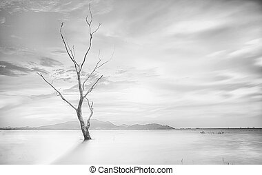 Lonely dead tree