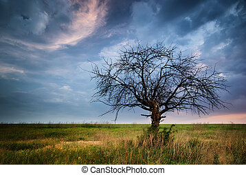 Lonely dead tree.