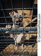 Lonely dog in a shelter behind wire mesh