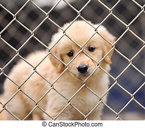 lonely dog in cage