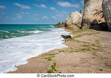 Lonely dog next to the Black sea in Turkey