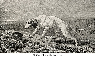 Lonely dog - Old illustration of a dog without owner. ...