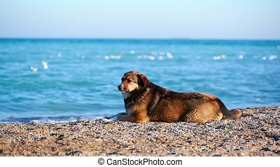 lonely dog on the beach looking for the owner
