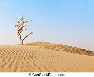 Lonely dry tree in sand desert
