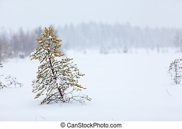 Lonely evergreen tree under strong blizzard on white snowy...