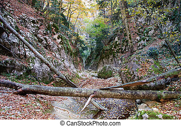 lonely fallen tree in the Canyon