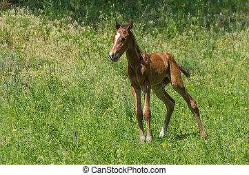 Lonely foal on a spring pasture