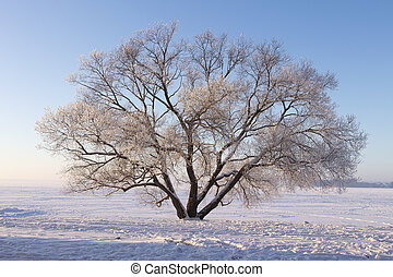 Lonely frosty tree on snowy meadow. Winter scene of nature. Soft sunlight illuminate tree on snow. Christmas background. Natural winter park.