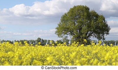 lonely green tree among yellow field, alternative fuel