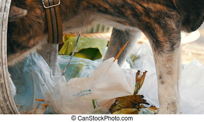 Lonely homeless dog is looking for food in a garbage can in the mud of packages and food rests