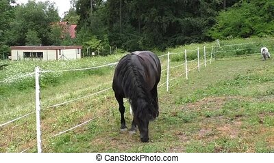 Lonely horse grazing in a meadow