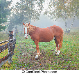 Lonely horse in foggy forest